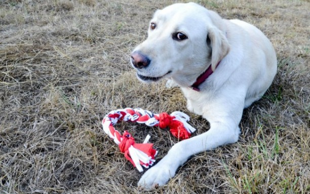 33 Diy Dog Toys From Things Around The House Barkpost