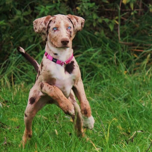 11 Rare Dog Breeds | The BarkPost