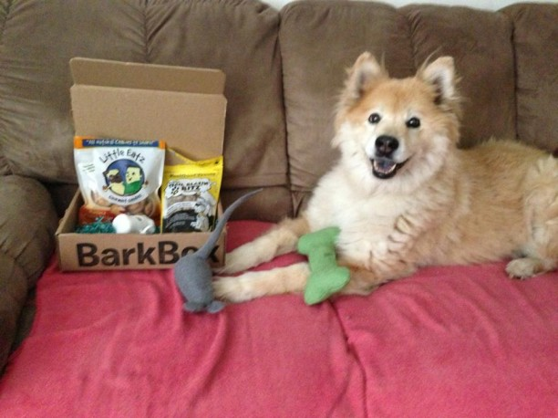 cheyanne with barkbox