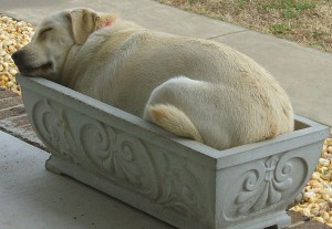 do napping in pot