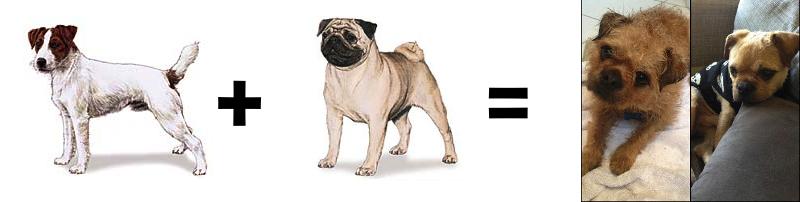 26 Mutt Math Equations Barkpost