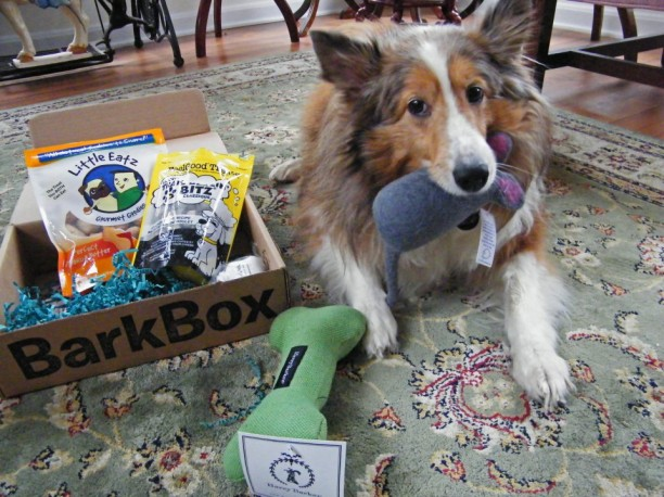 shamus with barkbox