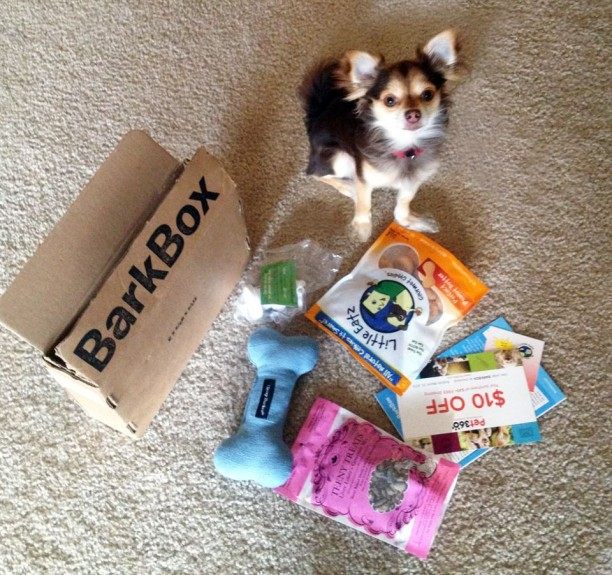 small dog barkbox