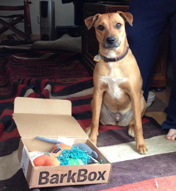 stella with barkbox
