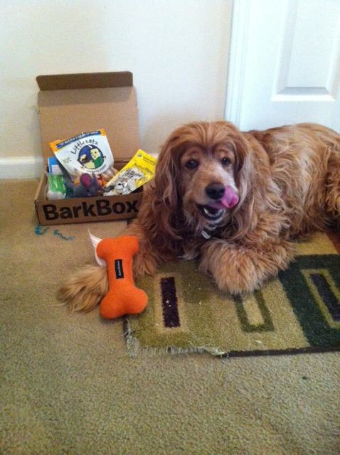 toby with barkbox