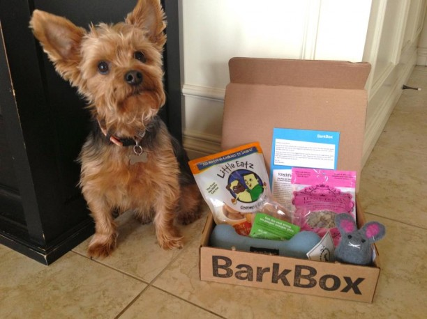 yorkie with barkbox