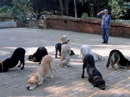 bummies of doggehs