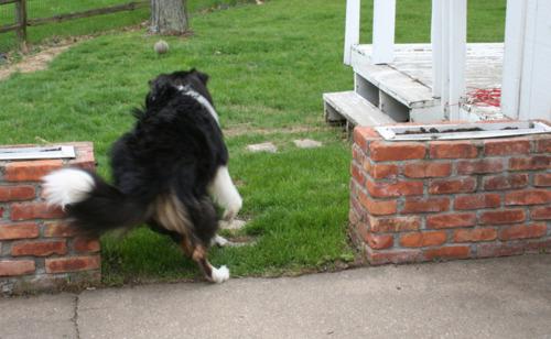 dog butt4