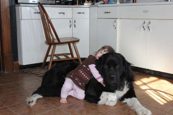 The 10 Greatest Things About Newfoundland Dogs Barkpost