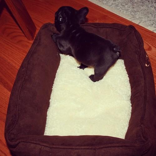puppybutt2