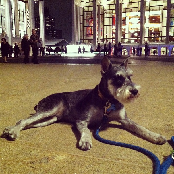 scout-at-lincoln-center