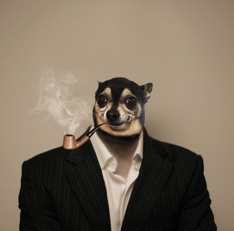 dog-smoking-pipe
