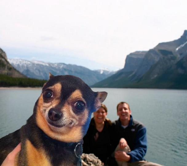 photobomb-dog