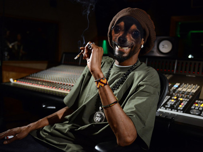snoop-lion-cricket