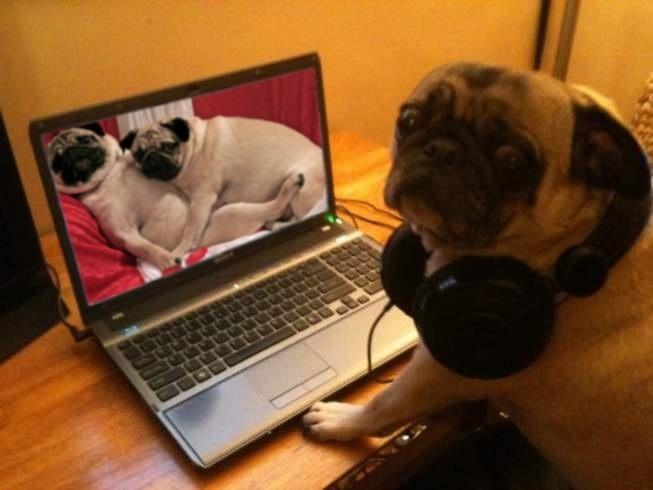 DogComputer4