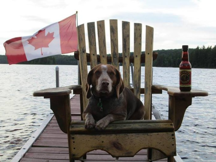 caroline c Happy belated Canada Day from BamBam! He spent his weekend by the lake drinking his Bowser Beer and snacking on his hamburgers