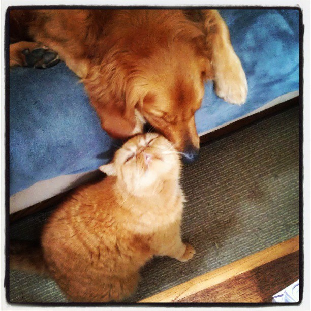Interspecies Love Letter From Doug The Cat To Charlie The