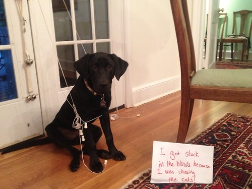 100-best-dog-shaming-moments--large-msg-134885865964