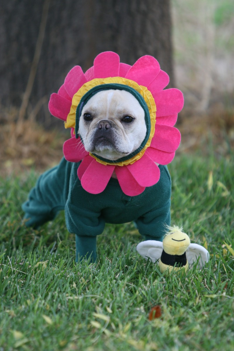 Iu0027m Sweet Pea a Beaming Flower of Sunshine & 22 Unique Dog Costume Ideas for Halloween - The Barkpost