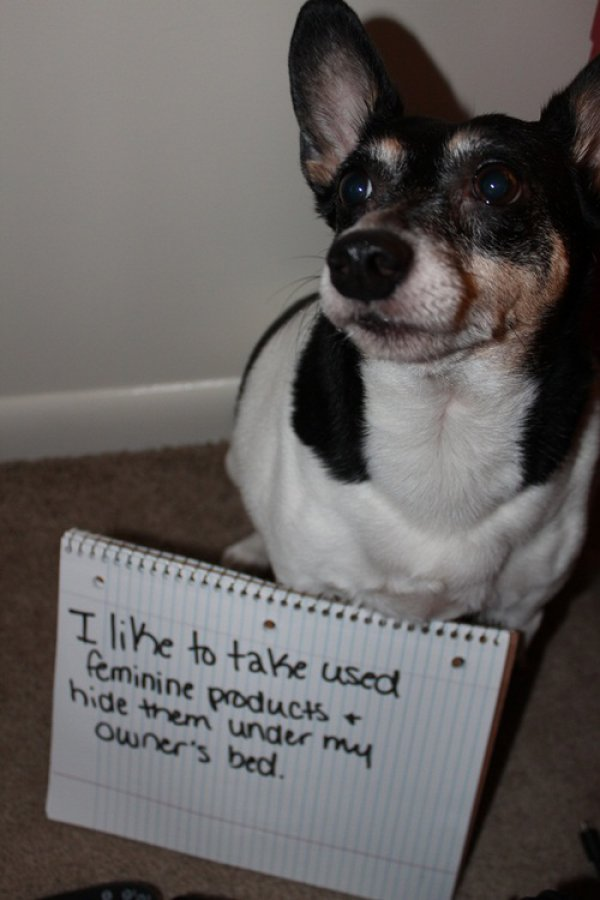 9d297ba17801ad1fce41213f5a0f58dd-dog-shaming-1
