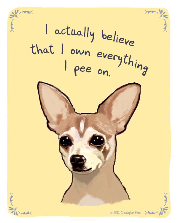 New Chihuahua pee tan
