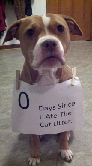 The Ultimate Collection Of Dogshaming Pics Barkpost