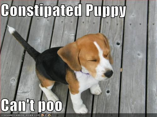 constipated dog