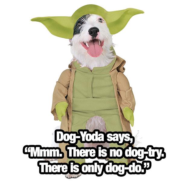 dog-yoda