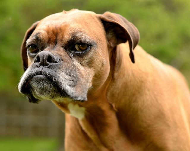 GRUMPINESS-dog