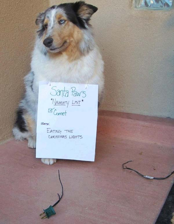 dog-shaming8