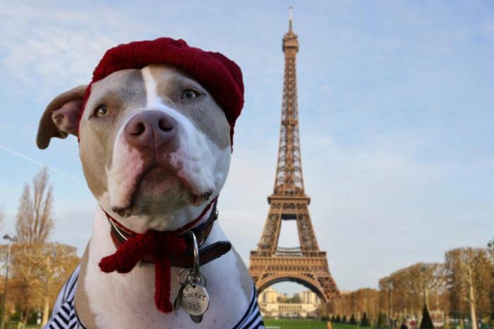 frenchdog14