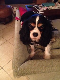 grumpy dog 10