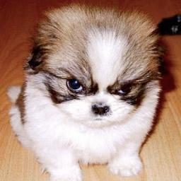 grumpy dog 11