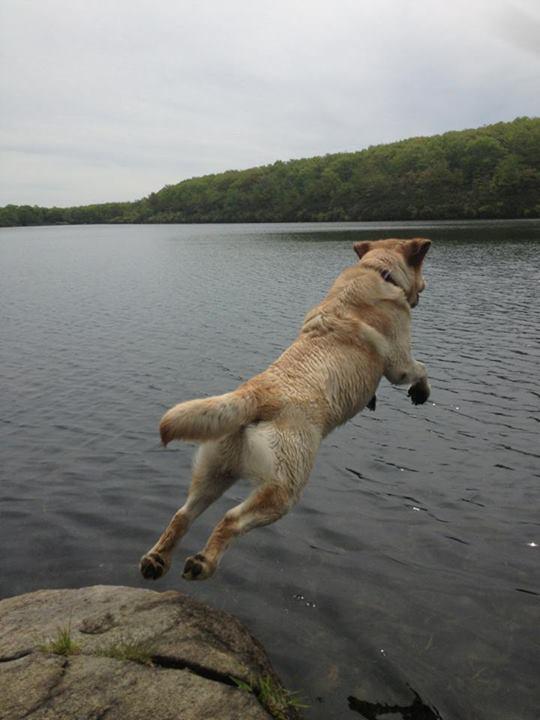 lab_in_lake