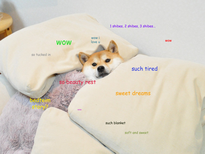 "Understand the ""Doge"" Meme In 7 Short Steps 