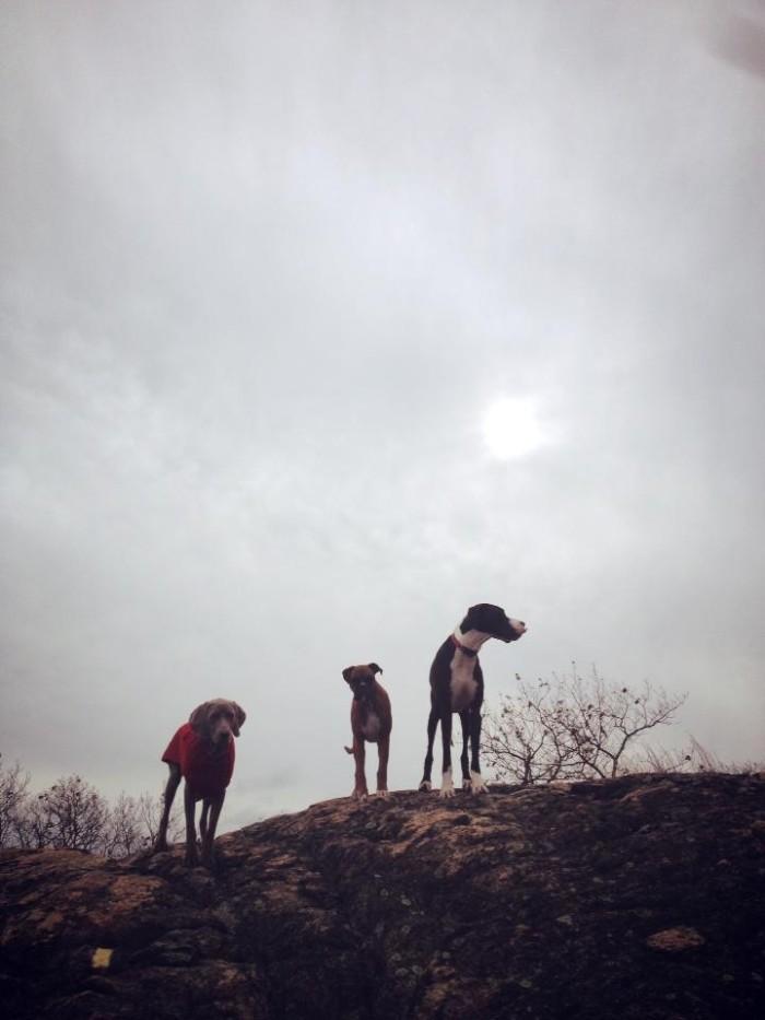 top_of_mountain_dog