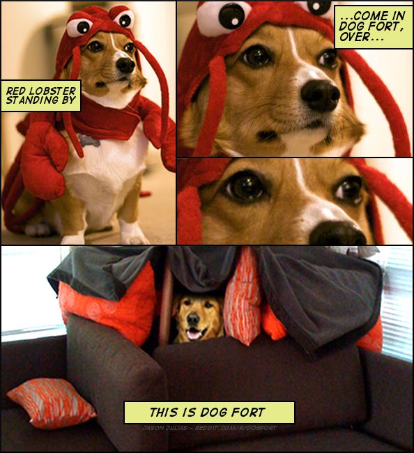 dogfort